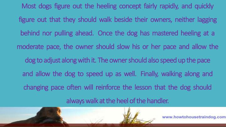 Most  dogs  figure  out  the  heeling  concept  fairly  rapidly,  and  quickly