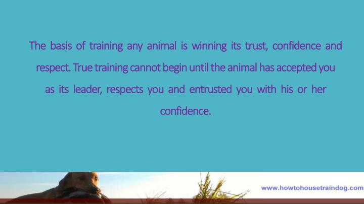 The  basis  of  training  any  animal  is  winning  its  trust,  confidence  and