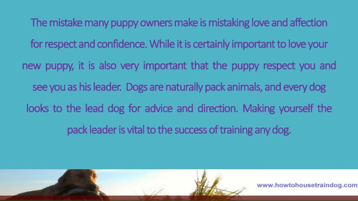 The mistake many puppy owners make is mistaking love and affection