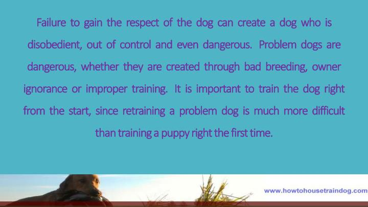 Failure  to  gain  the  respect  of  the  dog  can  create  a  dog  who  is