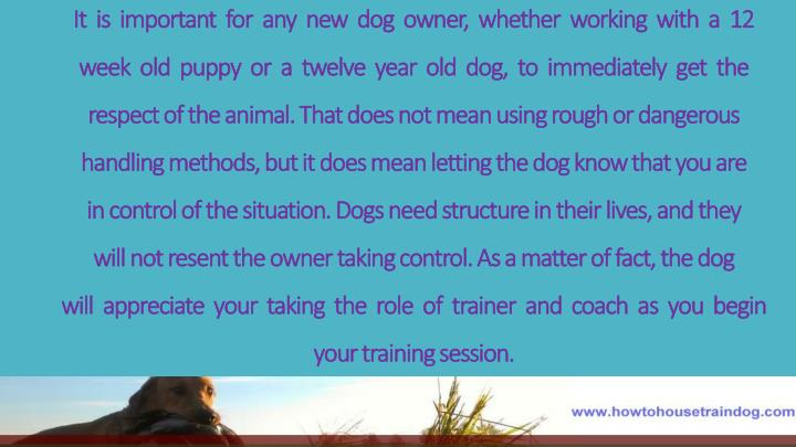It  is  important  for  any  new  dog  owner,  whether  working  with  a  12
