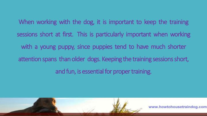 When  working  with  the  dog,  it  is  important  to  keep  the  training