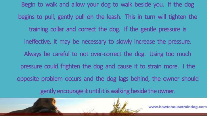 Begin  to  walk  and  allow  your  dog  to  walk  beside  you.   If  the  dog