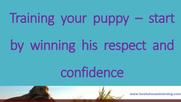 Training your puppy start by winning his respect and confidence