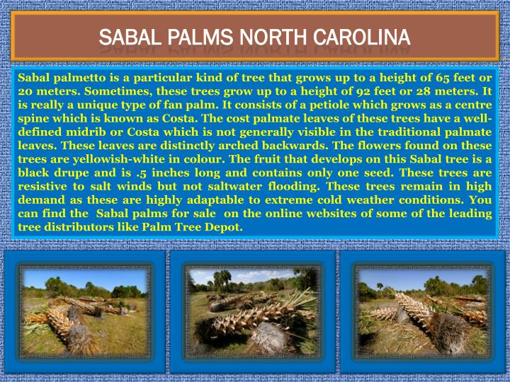 Sabal Palms North Carolina