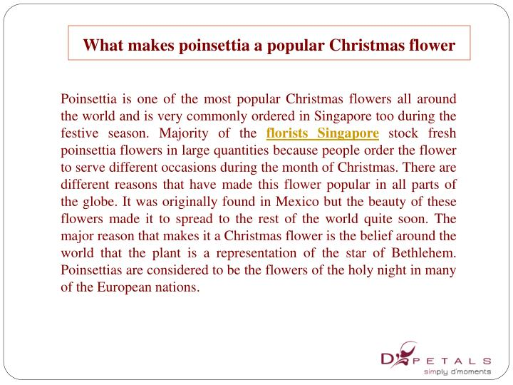 What makes poinsettia a popular Christmas flower