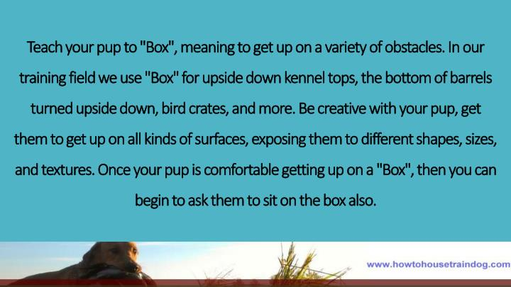 "Teach your pup to ""Box"", meaning to get up on a variety of obstacles. In our training"