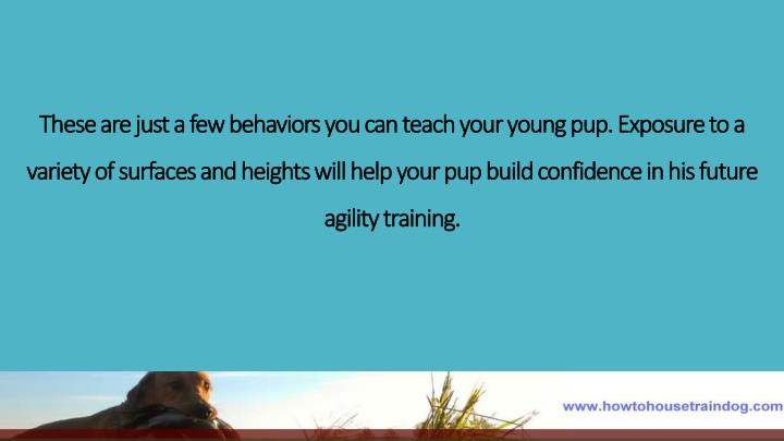 These are just a few behaviors you can teach your young pup. Exposure to a variety of