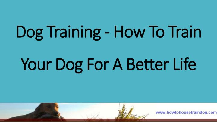 Dog training how to train your dog for a better life
