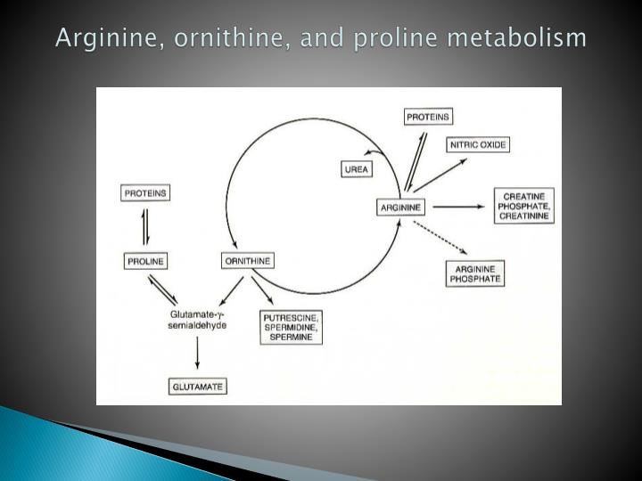 Arginine, ornithine, and proline metabolism