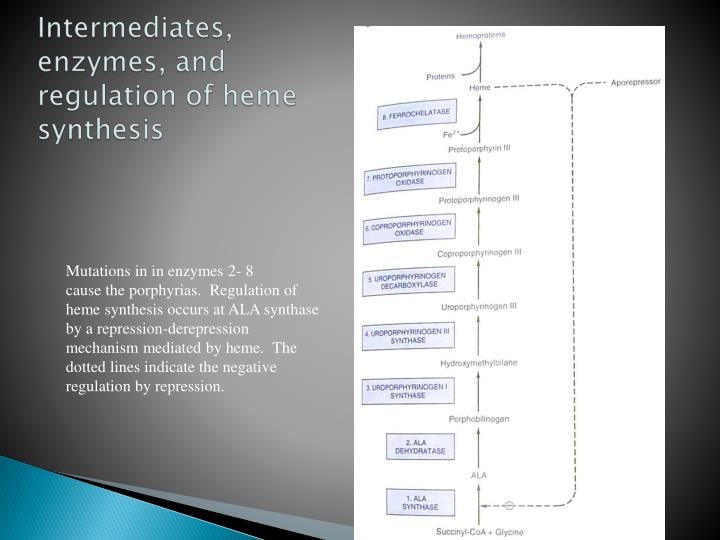 Intermediates, enzymes, and regulation of heme synthesis