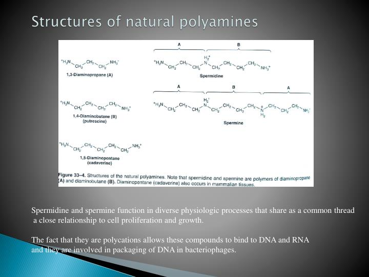 Structures of natural polyamines