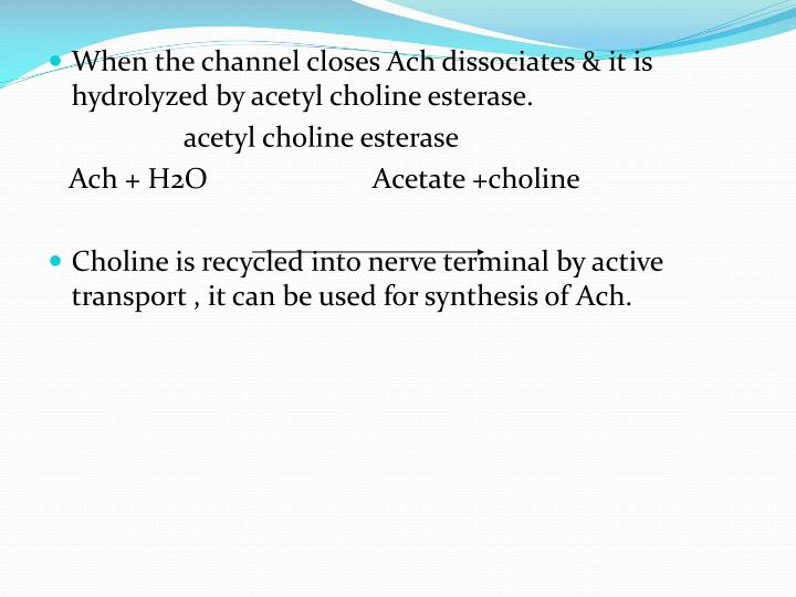 When the channel closes Ach dissociates & it is hydrolyzed by acetyl choline esterase.