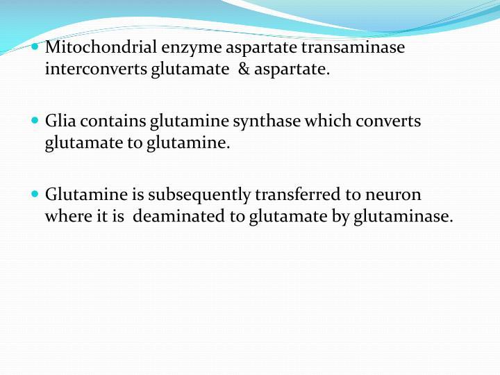 Mitochondrial enzyme aspartate transaminase interconverts glutamate  & aspartate.