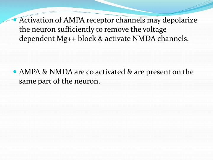 Activation of AMPA receptor channels may depolarize the neuron sufficiently to remove the voltage dependent Mg++ block & activate NMDA channels.
