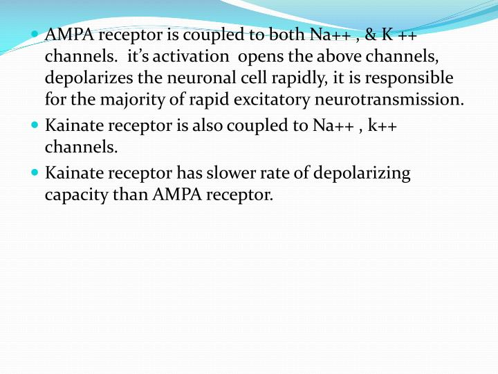 AMPA receptor is coupled to both Na++ , & K ++ channels.  it's activation  opens the above channels, depolarizes the neuronal cell rapidly, it is responsible for the majority of rapid excitatory neurotransmission.