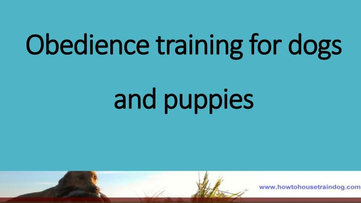 Obedience training for dogs and puppies