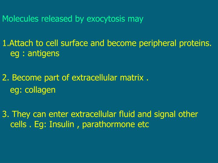 Molecules released by exocytosis may
