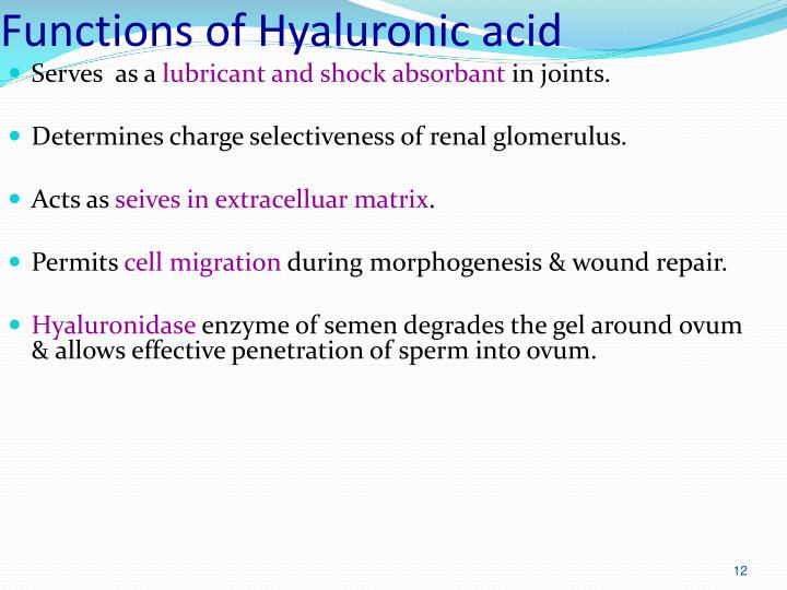 Functions of Hyaluronic acid