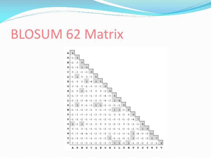BLOSUM 62 Matrix