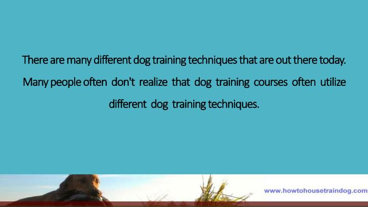 There are many different dog training techniques that are out there today. Many people