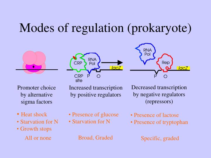 Modes of regulation (prokaryote)