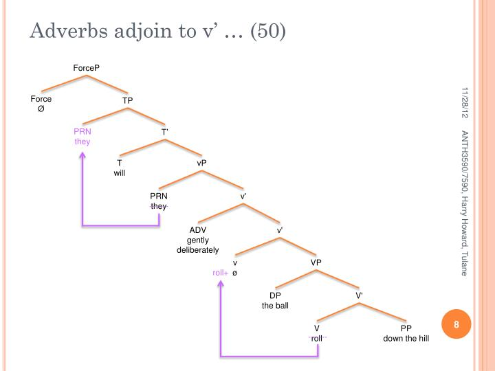 Adverbs adjoin to v