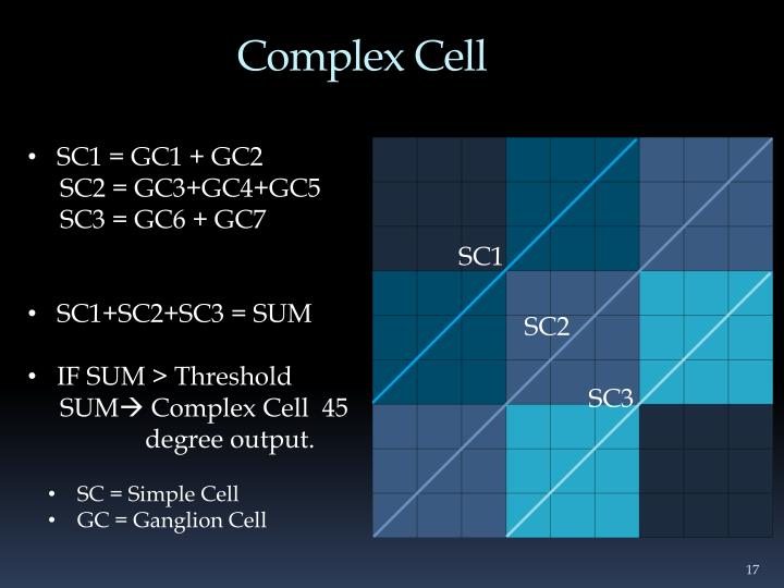 Complex Cell