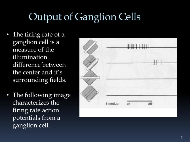 Output of Ganglion Cells