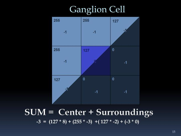 Ganglion Cell