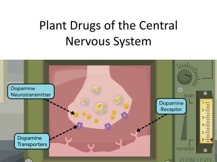 PPT - Plant Drugs of the Central Nervous System PowerPoint