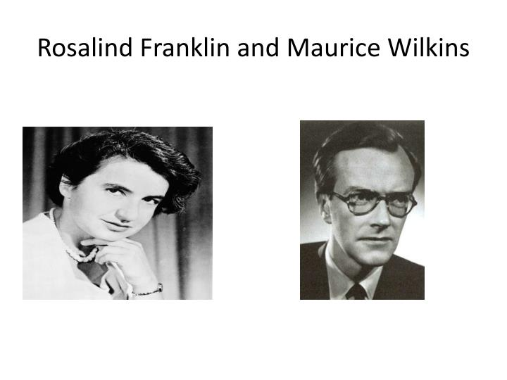 a study on the contributions of rosalind franklin maurice wilkins james watson francis crick and lin At that time maurice wilkins and rosalind franklin, both working at king's college, london, were using x-ray diffraction to study dna crick and watson used their findings in their own research.