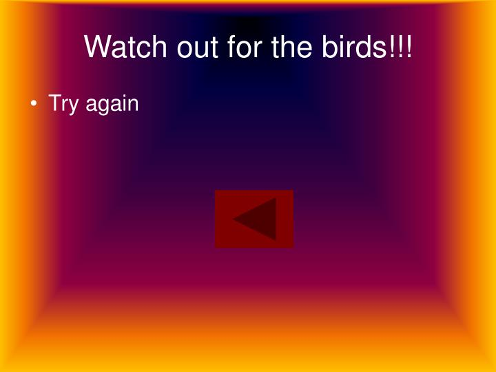Watch out for the birds!!!