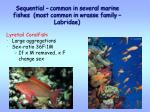 sequential common in several marine fishes most common in wrasse family labridae