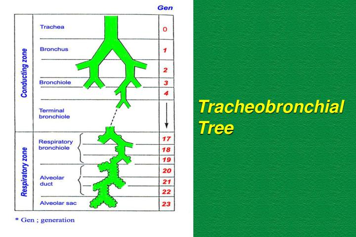 Tracheobronchial
