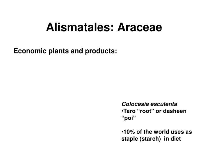 Alismatales: Araceae