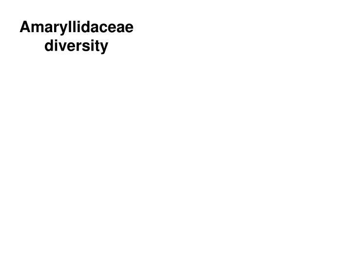 Amaryllidaceae diversity