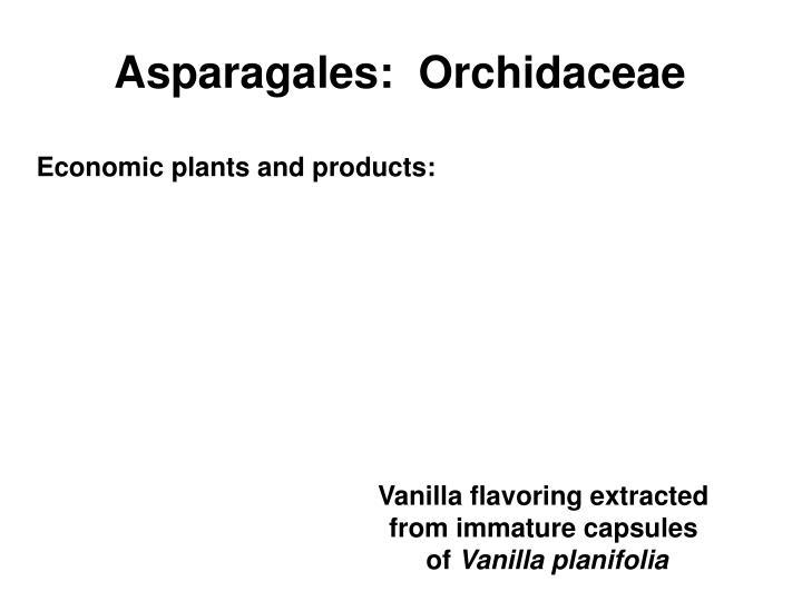 Asparagales:  Orchidaceae