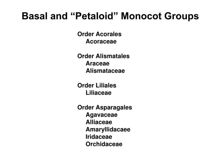 "Basal and ""Petaloid"" Monocot Groups"