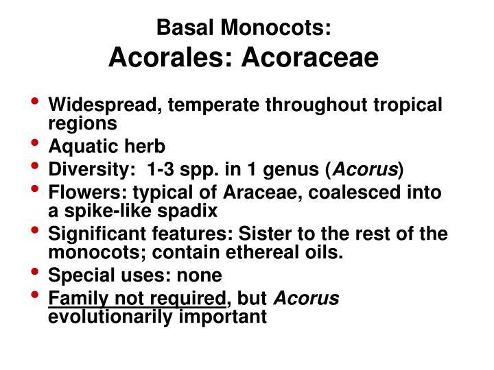 Basal Monocots: