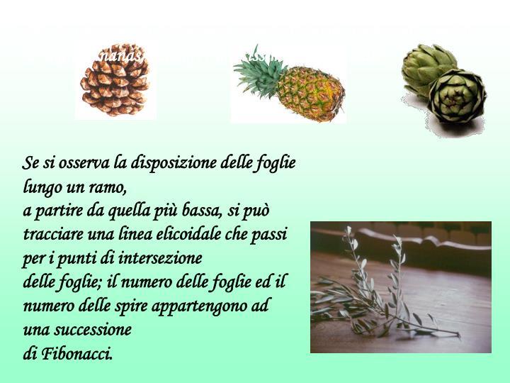 Ma la presenza di tali numeri si può ritrovare anche nelle spirali di pigne, ananas, carciofi e moltissimi altri vegetali.