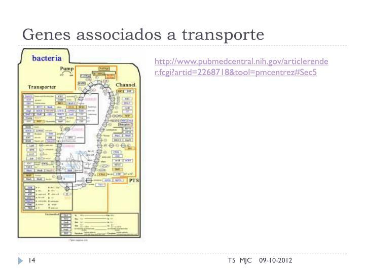 Genes associados a transporte