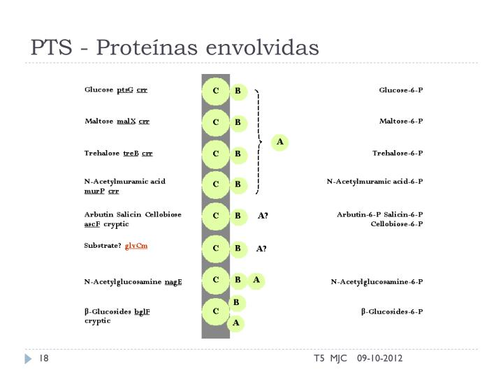 PTS - Proteínas envolvidas