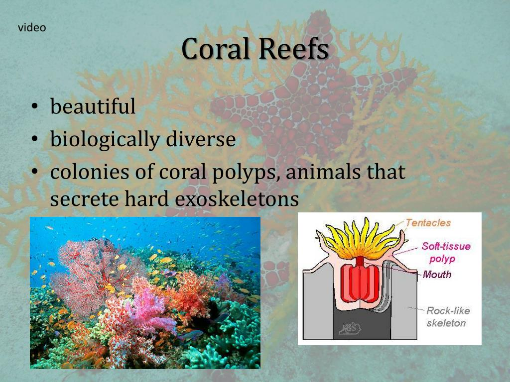 PPT - 34.4 Aquatic Ecosystems PowerPoint Presentation ...
