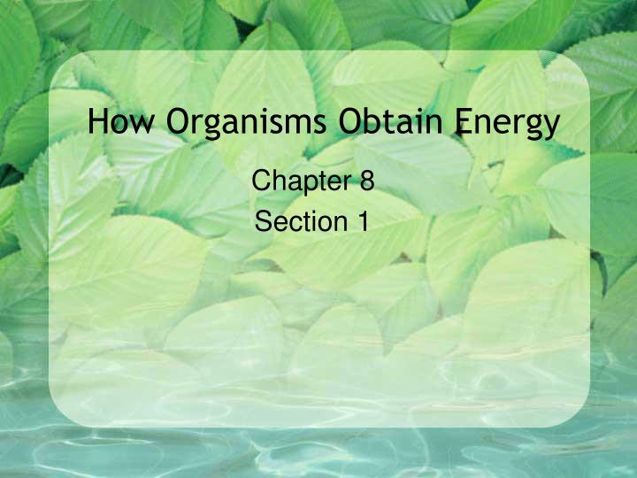 How organisms obtain energy