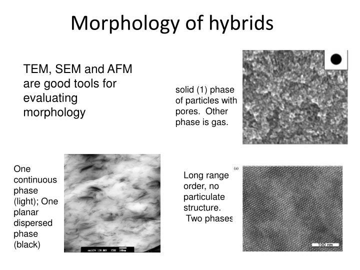 Morphology of hybrids