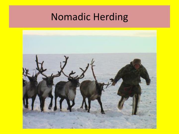 Nomadic Herding