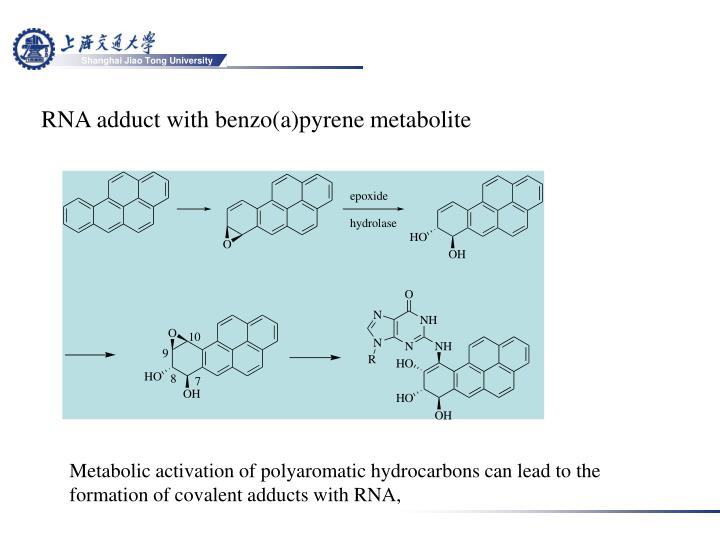 RNA adduct with benzo(a)pyrene metabolite