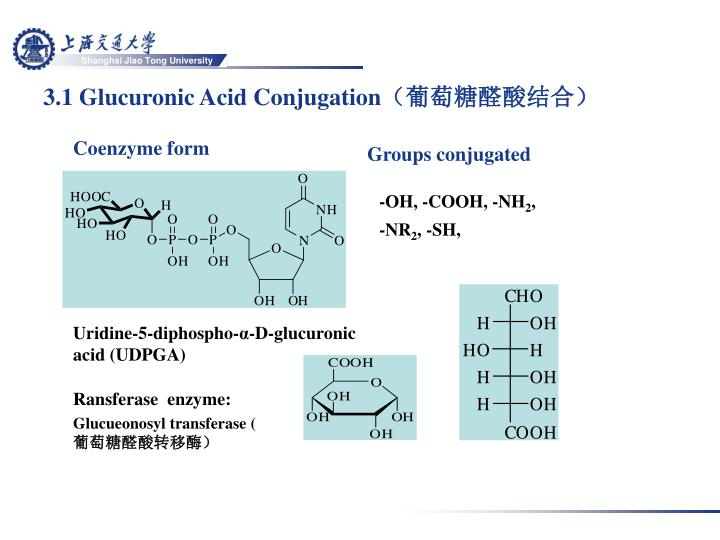 3.1 Glucuronic Acid Conjugation