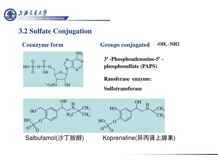 3.2 Sulfate Conjugation